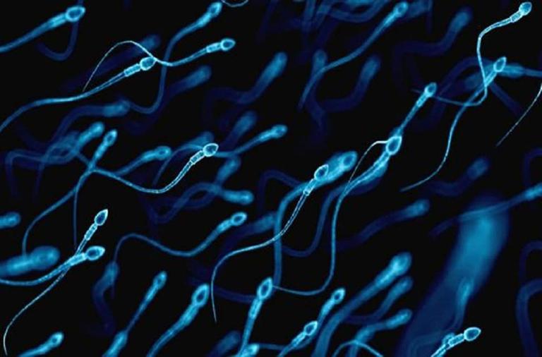 Rối loạn cương dương kèm theo tình trạng tinh trùng yếu sẽ ảnh hưởng đến khả năng sinh sản