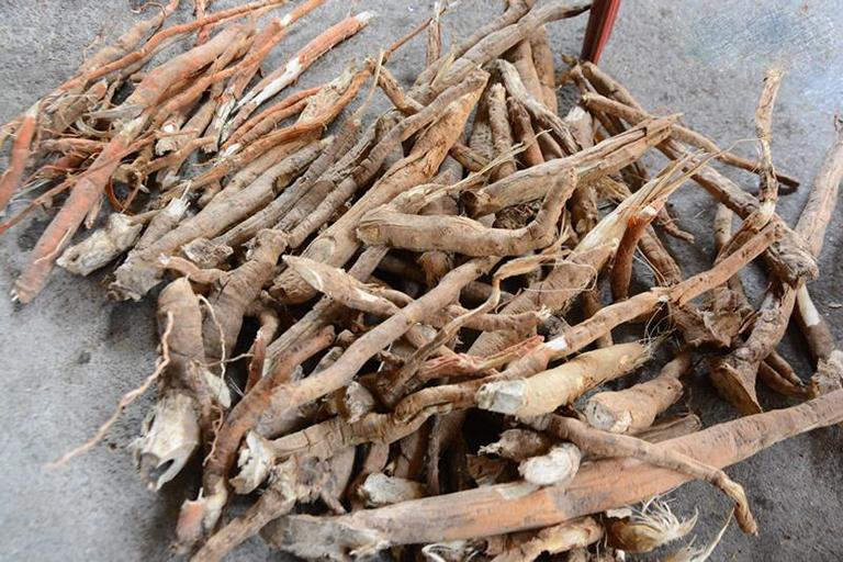 Thực hư về việc sử dụng rễ cau để làm thuốc chữa bệnh yếu sinh lý cho nam và nữ giới