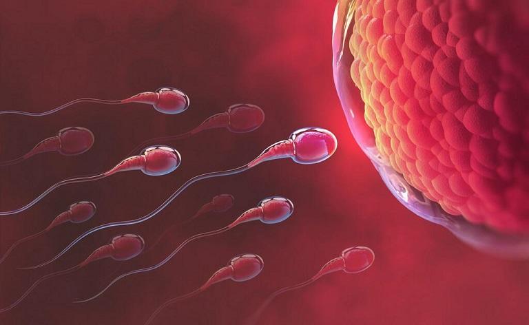 Tinh trùng gặp trứng tiến hành thụ thai