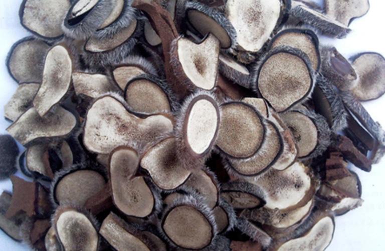 Bài thuốc nam từ nhung hươu giúp bổ thận tráng dương