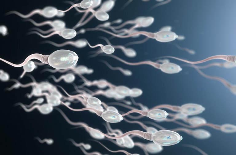 Đàn ông nên ăn gì tốt cho tinh trùng?