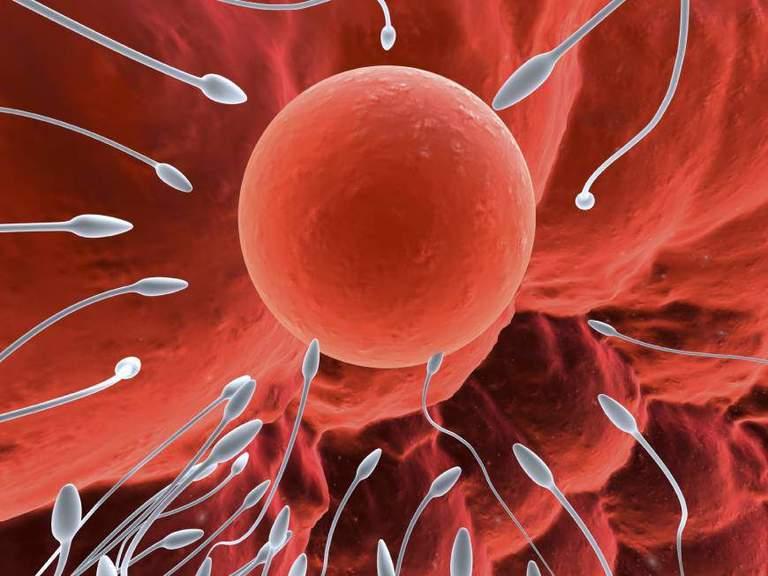 Điều kiện cần để quá trình thụ thai diễn ra là tình trùng khỏe mạnh phải gặp trứng