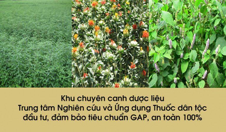 Vườn thuốc sạch tại Thuốc dân tộc