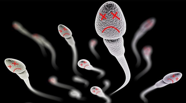 Tình trạng vô sinh, hiếm muộn xảy ra khi số lượng và chất lượng tinh trùng khỏe mạnh không đảm bảo