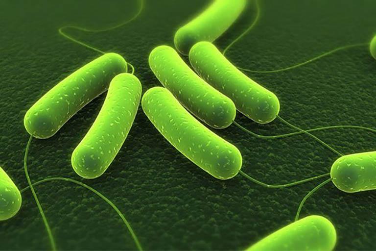 Vi khuẩn HP gây nên ung thư dạ dày