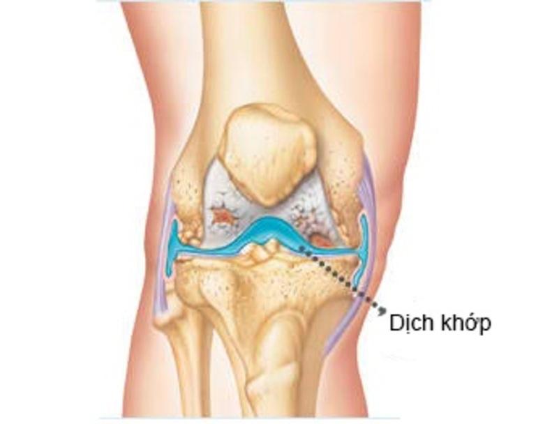 Chất nhờn khớp gối (dịch khớp) giảm ma sát hai đầu khớp và giúp chân di chuyển dễ dàng