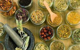 Các thảo dược thiên nhiên có thể chữa khỏi hoàn toàn bệnh trĩ trong một số trường hợp
