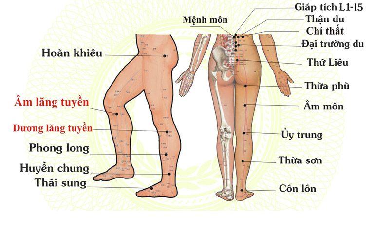 Điều trị thoái hóa khớp gối bằng cách bấm huyệt