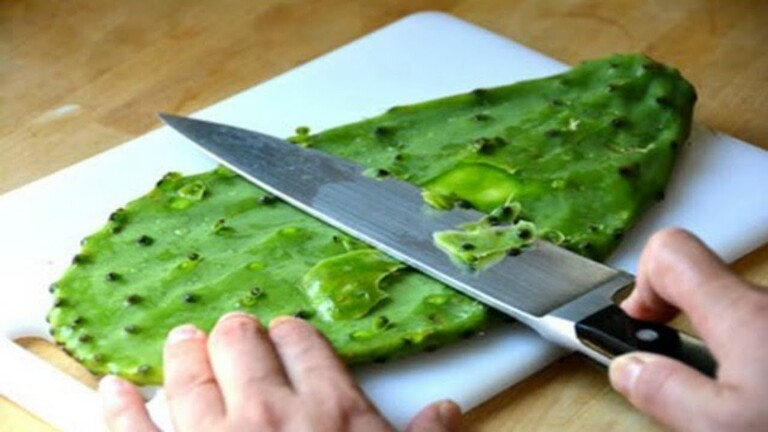 Chú ý loại bỏ gai và nhựa của lá xương rồng để không bị ngộ độc khi dùng lá này chế biến món ăn