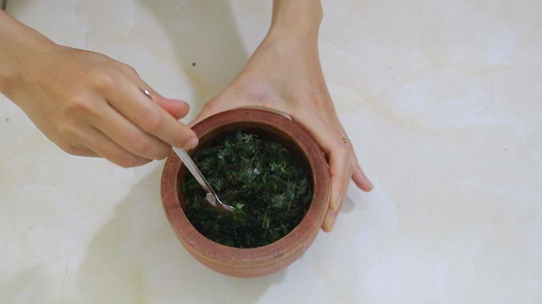 Thuốc chữa thoát vị đĩa đệm từ cây mần ri
