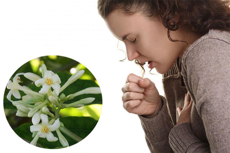 Mẹo chữa bệnh ho bằng hoa đu đủ đực người bệnh không nên bỏ qua