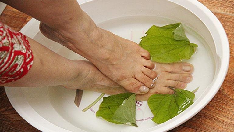 Sử dụng bài thuốc ngâm từ lá lốt vào mỗi buổi tối để cải thiện các chứng đau nhức do chứng thoái hóa khớp gối gây ra