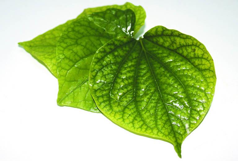 Bài thuốc chữa thoái hóa khớp gối từ lá lốt