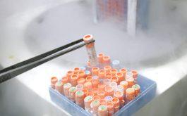 Điều trị thoái hóa khớp gối bằng tế bào gốc đòi hỏi kỹ thuật phức tạp