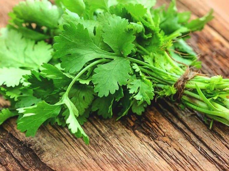 Xông hơi bằng rau mùi có tác dụng chính là giảm đau và kháng viêm