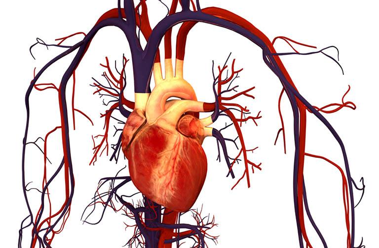 Viêm mạch máu