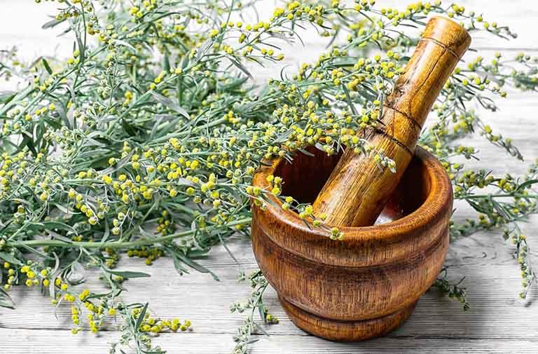 Điểm qua những lưu ý khi sử dụng cây ngải cứu để trị bệnh thoái hóa đốt sống cổ