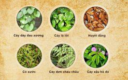Có rất nhiều loại cây thuốc nam chữa bệnh xương khớp