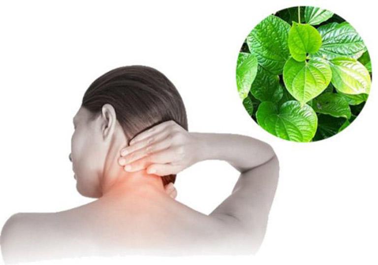 Lá lốt có tác dụng kháng viêm và hỗ trợ cải thiện tình trạng đau nhức do bệnh gây ra