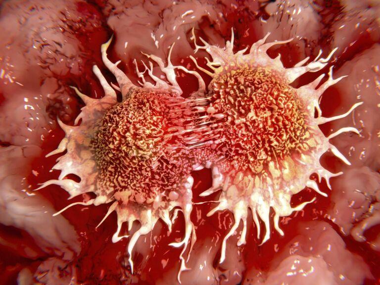 Tác dụng của hoa đu đủ đực chữa ung thư