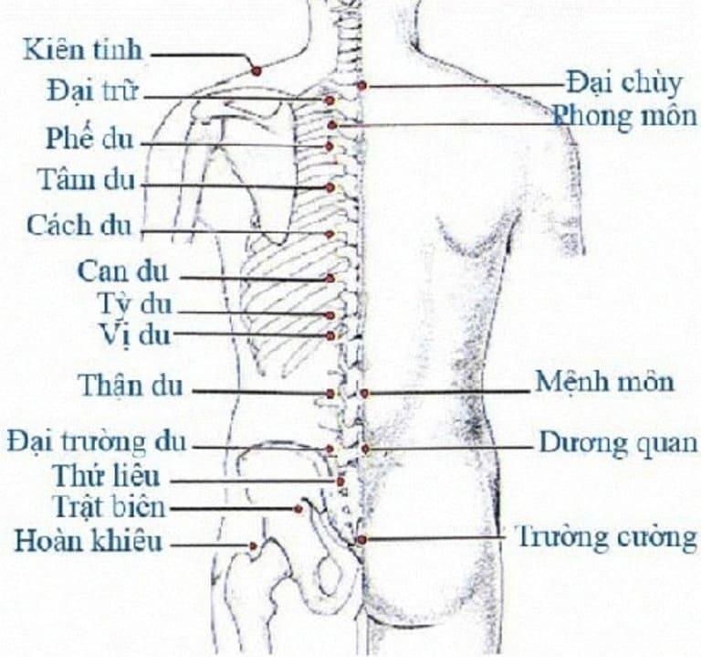 Một số huyệt đạo ở thắt lưng và mông chữa đau thần kinh tọa.