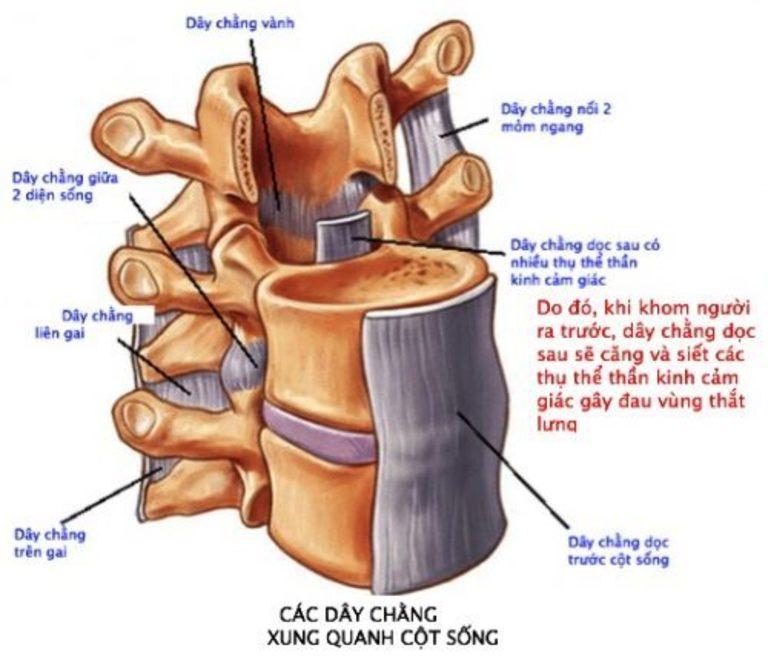 Dây chằng thắng lưng bị giãn nhiều khi mang thai và chưa kịp hồi phục là nguyên nhân phổ biến gây đau thắt lưng sau sinh. cơn đau có thể theo dây thần kinh tọa lan xuống chân.