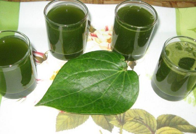 Uống nước lá trầu không giúp loại bỏ nám da từ bên trong cơ thể