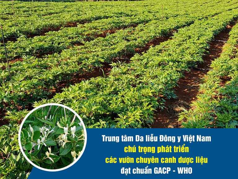 Trung tâm Da liễu Đông y Việt Nam luôn chú trọng phát triển thảo dược sạch