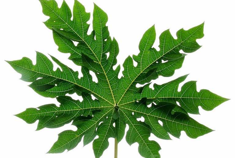 Cách dùng lá đu đủ chữa trị viêm da cơ địa