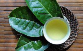 Cách chữa viêm da dị ứng từ các cây thuốc Nam quen thuộc