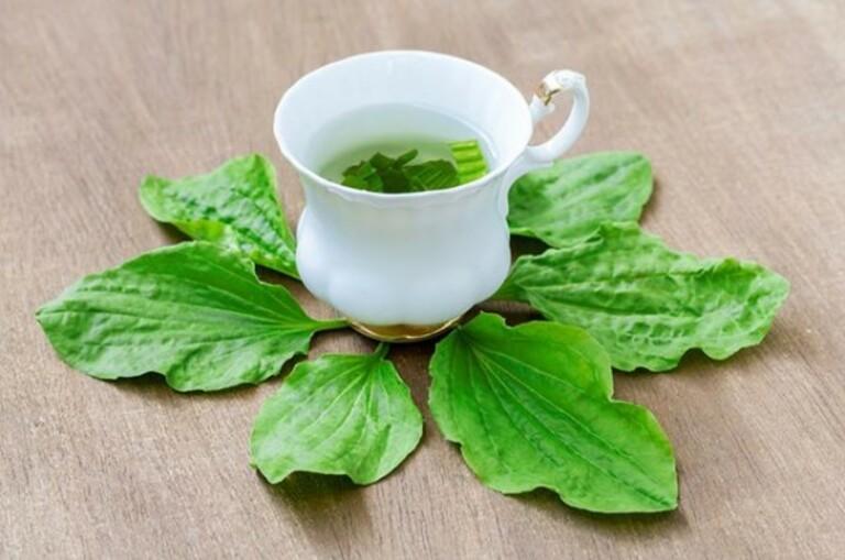 Nước uống từ lá mã đề tốt cho hoạt động của phổi.