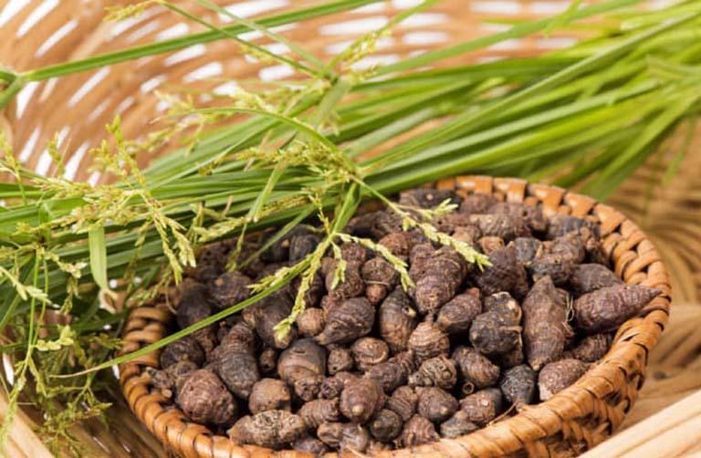 Cách sử dụng và liều dùng cây Hương Phụ