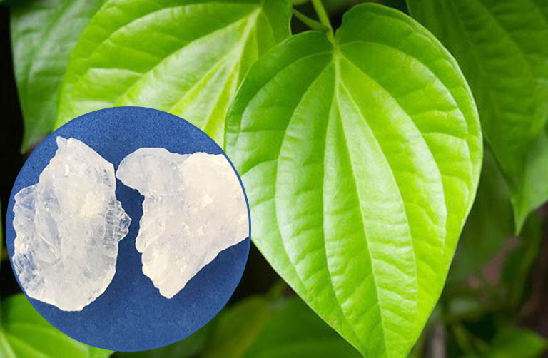 Sử dụng kết hợp lá trầu không và phèn chua điều trị bệnh tổ đỉa và giảm ngứa