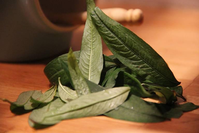 Dùng rau răm chữa bệnh tổ đỉa là phương pháp an toàn và mang lại hiệu quả