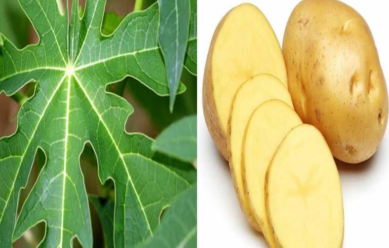 Trị viêm da cơ địa bằng lá đu đủ và khoai tây