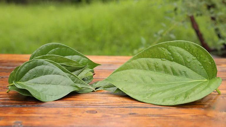 Dùng lá trầu không để đẩy lùi các triệu chứng do mụn nhọt ở mặt gây ra
