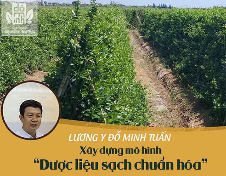 Vườn dược liệu chuyên canh hữu cơ của Đỗ Minh Đường