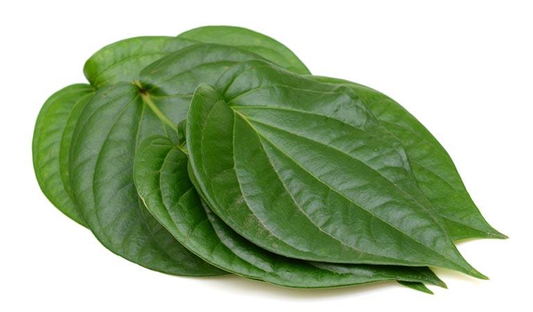 Sử dụng lá trầu không để điều trị ghẻ ngứa sẽ có tác dụng đẩy lùi cơn ngứa và ngừa viêm nhiễm