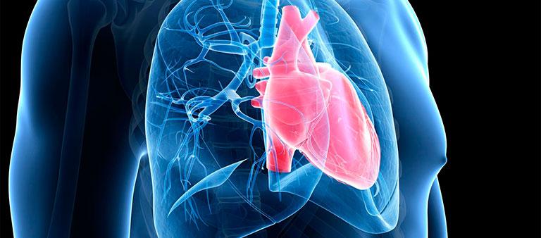 lupus ban đỏ hệ thống bệnh học