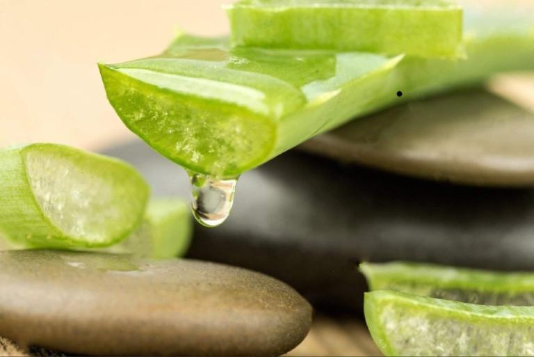 Nha đam có khoảng 20 vitamin tốt cho đại tràng, giảm đau hiệu quả