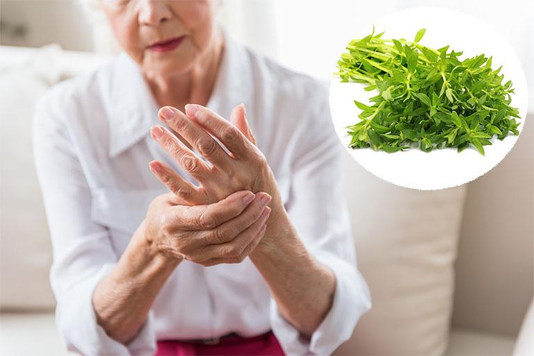 Rau ngổ có vị cay, tính mát, có tác dụng thanh nhiệt, giải độc, tiêu sưng, tiêu viêm, giảm đau - Rất thích hợp để trị bệnh viêm xương khớp