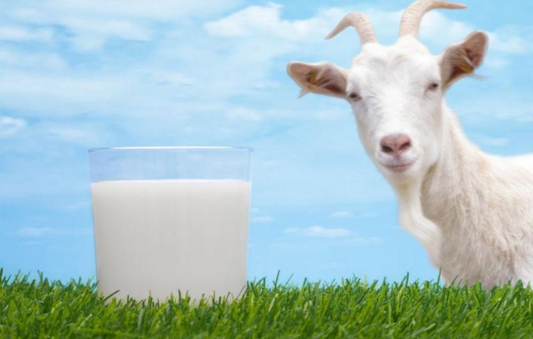 Trào ngược dạ dày nên uống sữa dê