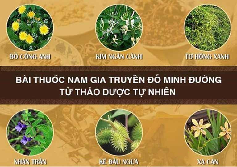Một số vị thảo dược có trong bài thuốc chữa đau vai gáy của Đỗ Minh Đường