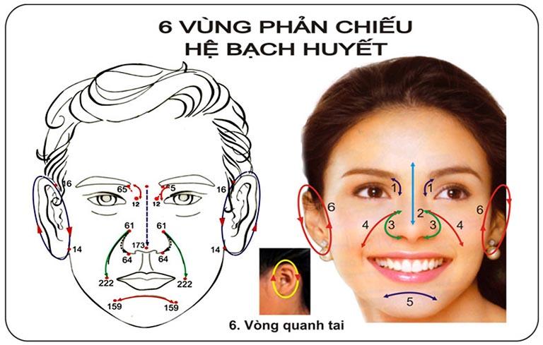 6 vùng phản chiếu hệ bạch huyết