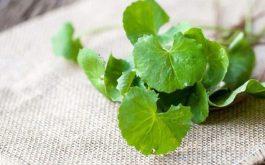 Đắp mặt nạ từ lá rau má chữa mụn và thâm sẹo được nhiều người sử dụng.