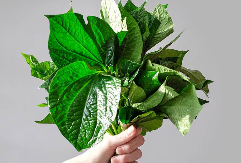Cách dùng nước sắc cây lá lốt và muối điều trị đau răng