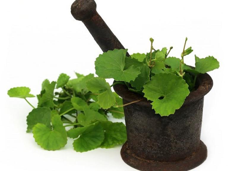 Dùng mặt nạ từ nước cốt lá rau má nguyên chất hằng ngày để chữa mụn và mờ vết thâm sẹo.