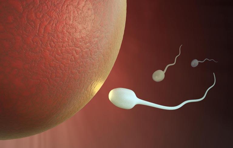 Kinh nguyệt đến sớm có thể là dấu hiệu của quá trình thụ tinh