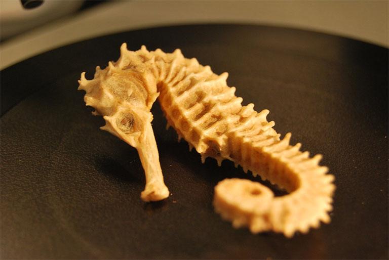 Cá ngựa - Thần dược trị xuất tinh sớm, rối loạn cương dương, liệt dương ở nam giới