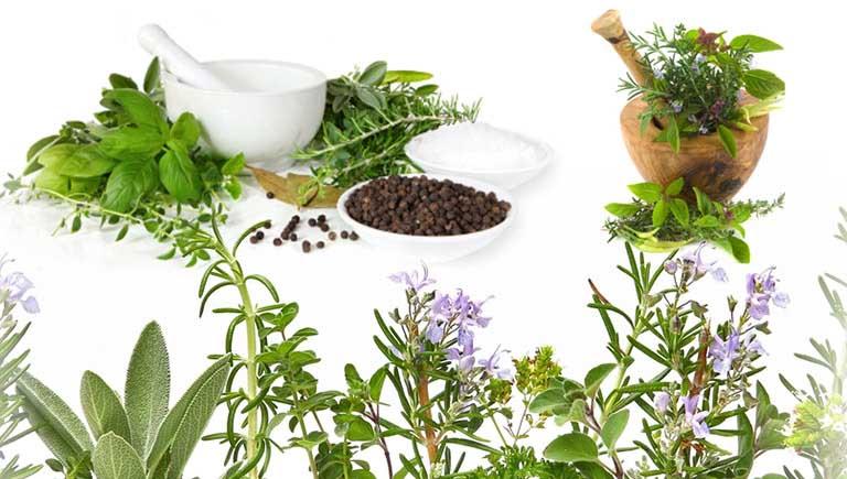 Sử dụng cây thuốc nam hay Đông y chữa bệnh tại nhà đã trở nên rất phổ biến